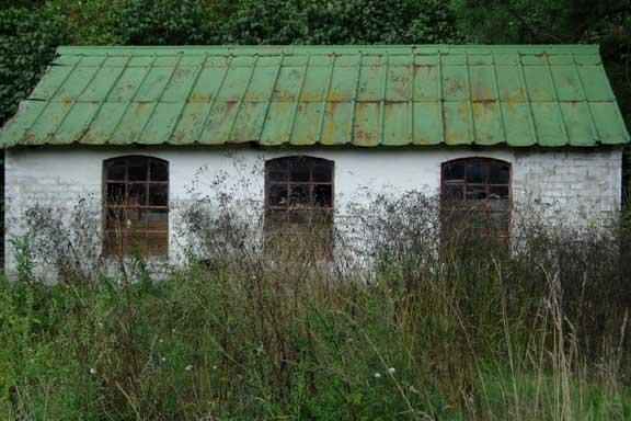 Gammel forladt, forfalden staldbygning med irgrønt tag et sted på Fyn. Fotograf: Susanne Randers