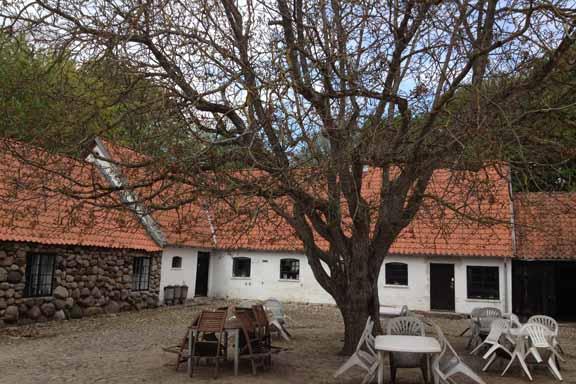Malergårdens gårdsplads med valnøddetræet, der er plantet i 1935. Fotograf: Susanne Randers