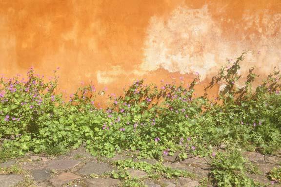 Bygningernes smukke gule farve giver associationer til Rom. Fotograf: Susanne Randers