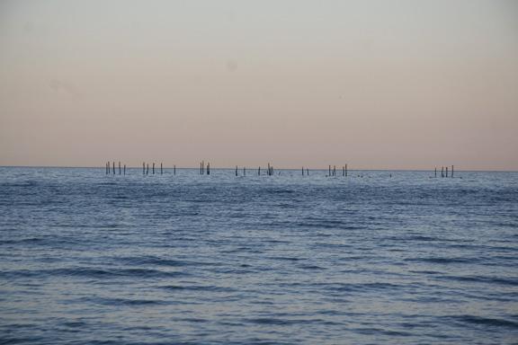 Møns klint - pæle i vandet. Fotograf: Susanne Randers