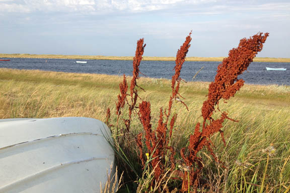 mitkrearum.dk kreativitet 111 læsø morgentur til stokken rustrød plante ved båd