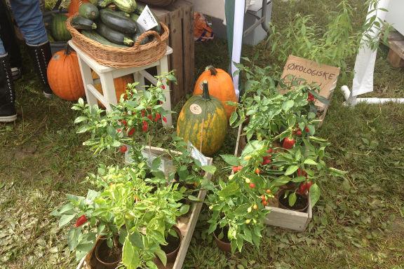 Flotte chiliplanter fra Urtopia Frilandsurter på høstmarkedet hos Engvang Frugt. Fotograf: Susanne Randers