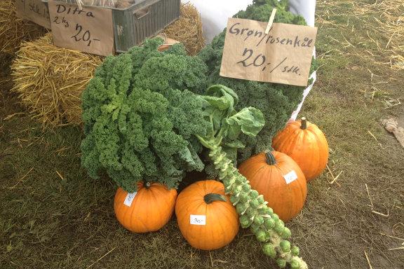 Til høstmarked hos Engvang Frugt i samarbejde med Stevns Fødevarefællesskab. Fotograf: Susanne Randers