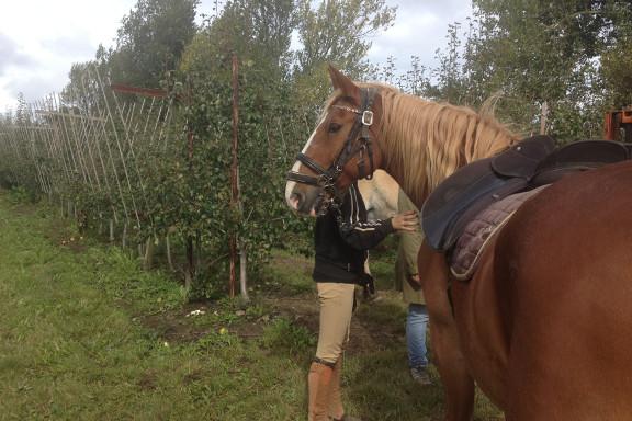 Hesteridning under høstmarkedet hos Engvang Frugt. Fotograf: Susanne Randers