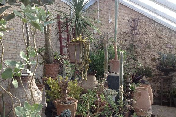 mitkrearum.dk kreativitet 151 bondens marked gisselfeld paradehuset orangeri kaktusser