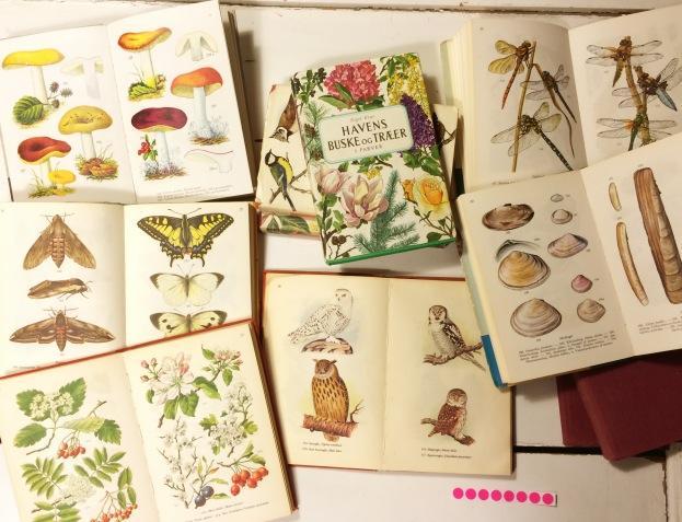 365 moodboards i 2014. Moodboard #66: På skattejagt efter fauna, flora, fugle og fisk. Politikens illustrerede bøger i farver. Smashup. Fotograf: Susanne Randers
