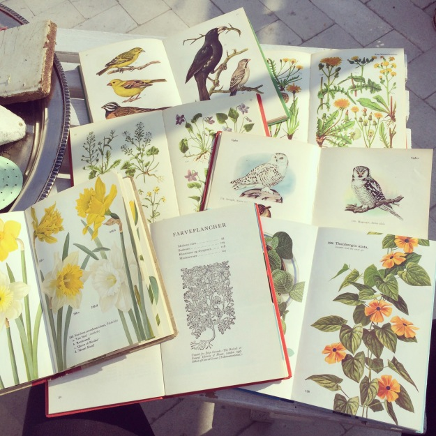 365 mood boards in 2014. Mood board #115: A table full of joy and gratitude. Books with birds and flora illustrations from the 60's. Instagram filter Valencia. Photographer: Susanne Randers