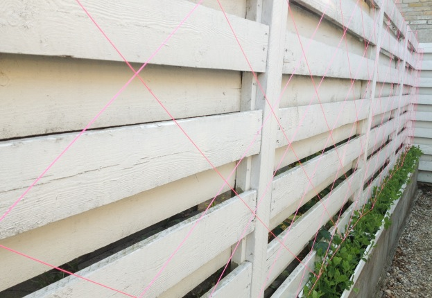 365 moodboards in 2014. Moodboard #116: Drømmer om et helt hegn med ærteblomster. Espalier lavet med neonpink mursnor. Maj 2013. Fotograf: Susanne Randers