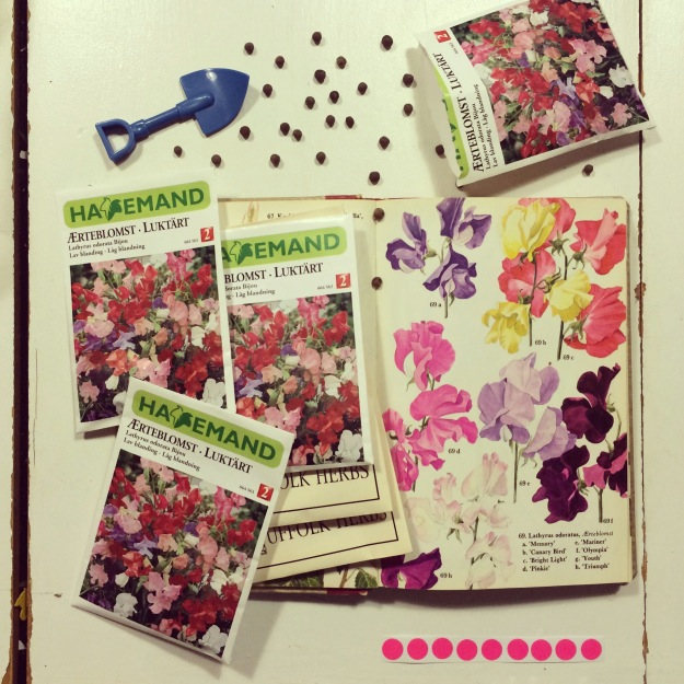 365 mood boards in 2014. Mood board #116: Dreaming of a wall of lathyrus. Sweet peas. Smashup. Instagram filter Valencia. Photographer: Susanne Randers